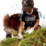 草小積み作り