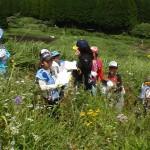 草原の生き物観察会