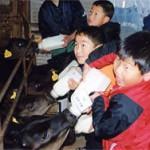 畜産農家で、子牛にミルクをあげるお手伝い